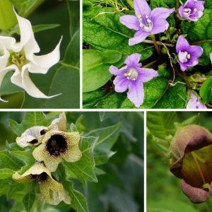 Witch Flight Flower Essence
