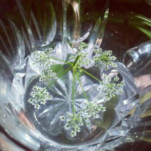 Water Hemlock Flower Essence