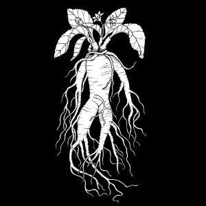 Mandrake Root Print