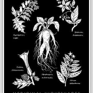 Medicinal Nightshades Poster