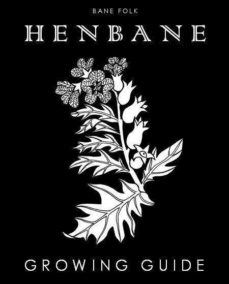 Henbane Growing Guide