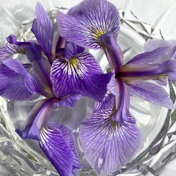 blue-flag-flower-essence