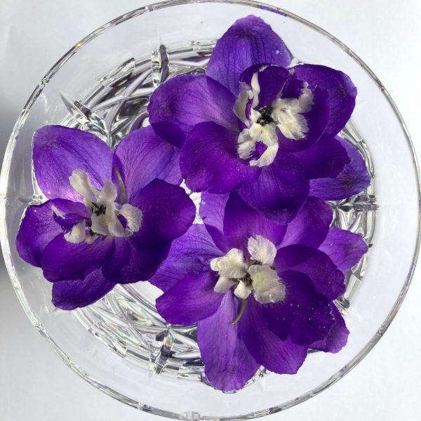delphinium-flower-essence